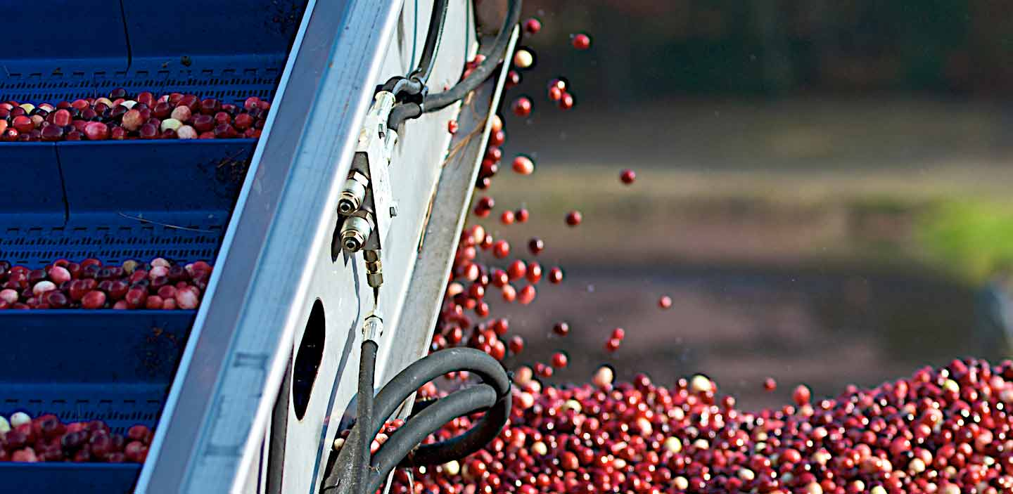 cranberry automated conveyor systems